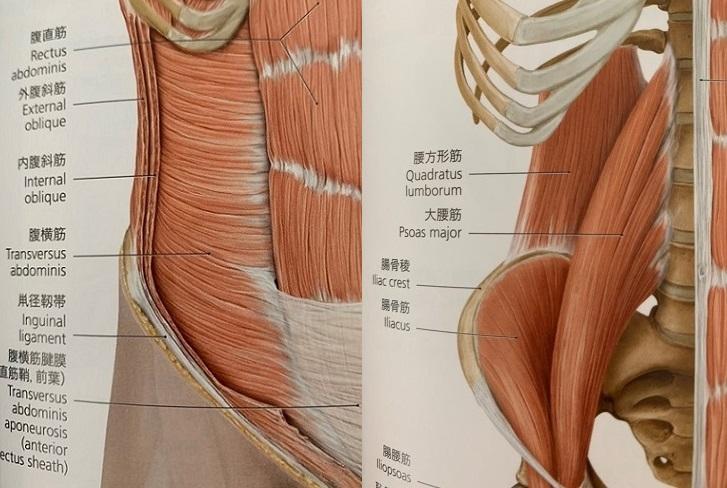 みさき整体院-腰痛-筋肉